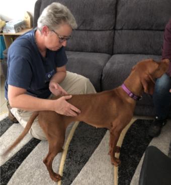Human Bowen – Yes!  Dog Bowen – Really??